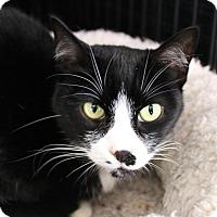 Adopt A Pet :: Thea - Warwick, RI