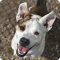 Adopt A Pet :: Sangria - Chattanooga, TN