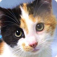 Adopt A Pet :: Carmela - Prospect, CT