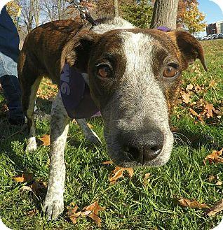 Hound (Unknown Type) Mix Dog for adoption in Detroit, Michigan - Homer