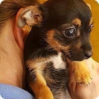 Adopt A Pet :: Minion - Los Angeles, CA