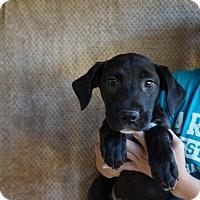 Adopt A Pet :: June - Oviedo, FL