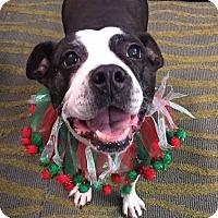 Terrier (Unknown Type, Medium) Mix Dog for adoption in Williamsburg, Virginia - LOLA