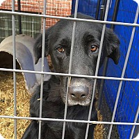 Adopt A Pet :: Misty - Buckeystown, MD