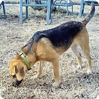 Adopt A Pet :: Livvy - Trenton, NJ
