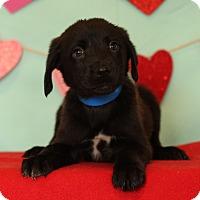 Adopt A Pet :: Drake - Waldorf, MD