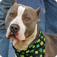 Adopt A Pet :: RICARDO - Louisville, KY