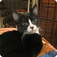 Adopt A Pet :: Wiley - Faribault, MN