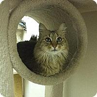 Adopt A Pet :: Clarisse - Pekin, IL