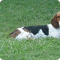 Adopt A Pet :: Murphy - Palm Bay, FL