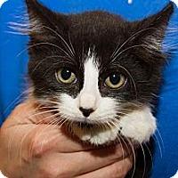 Adopt A Pet :: Callen - Irvine, CA