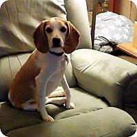 Adopt A Pet :: Turner - Novi, MI