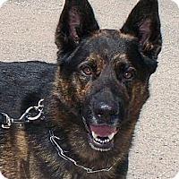 Adopt A Pet :: FRITZ - Vista, CA