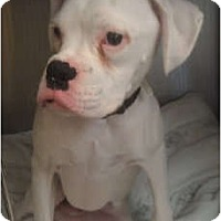 Adopt A Pet :: Rascal! - Grafton, MA
