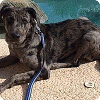 Adopt A Pet :: Mason - Scottsdale, AZ
