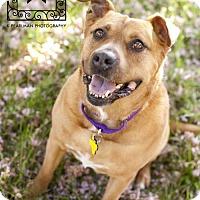 Adopt A Pet :: Pearl (senior) - Fredericksburg, VA
