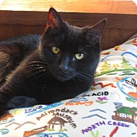 Adopt A Pet :: SILVIE **declawed** - Hamilton, NJ