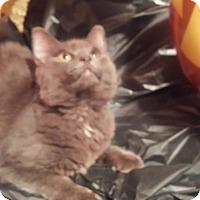 Adopt A Pet :: Cecil - Harrisburg, NC