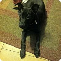 Adopt A Pet :: Michonne - Las Vegas, NV