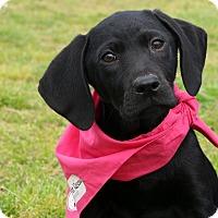 Adopt A Pet :: Libby~ meet me! - Glastonbury, CT