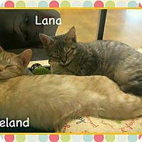 Adopt A Pet :: Lana - Atco, NJ