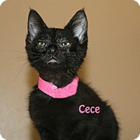 Adopt A Pet :: Cece - Idaho Falls, ID