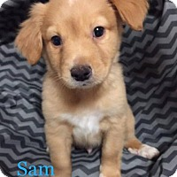 Adopt A Pet :: Sam - Spring, TX