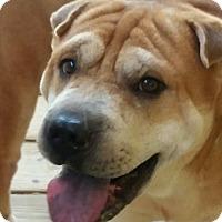 Adopt A Pet :: Ivan in N.C. - Mira Loma, CA