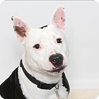 Adopt A Pet :: Brian - San Luis Obispo, CA