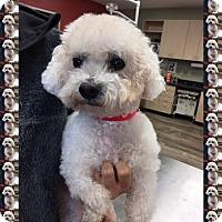 Adopt A Pet :: Adopted!!Pumpkin - TX - Tulsa, OK