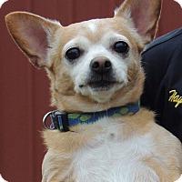 Adopt A Pet :: Dude - Joplin, MO