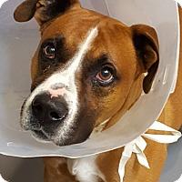 Adopt A Pet :: COLBY - Tucson, AZ