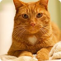 Adopt A Pet :: Ambrose - Troy, MI