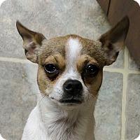 Adopt A Pet :: Gino - Tavares, FL