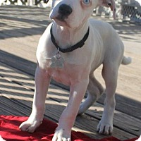 Adopt A Pet :: Jagr - Ocala, FL