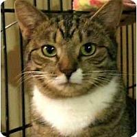 Adopt A Pet :: Mitzy - Plainville, MA