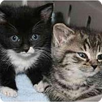Adopt A Pet :: Figgy & Fiona - Arlington, VA