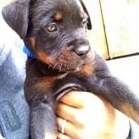 Adopt A Pet :: TIA - Inglewood, CA