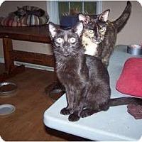 Adopt A Pet :: Roscoe - Chester, VA