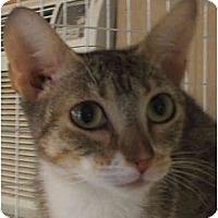 Adopt A Pet :: Mia Mau - Davis, CA