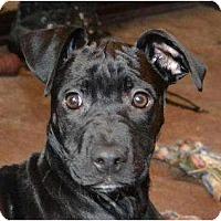 Adopt A Pet :: Twinkie - Rigaud, QC