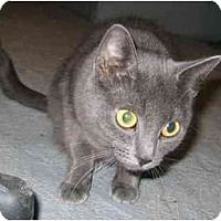 Adopt A Pet :: Amelia - Feeding Hills, MA