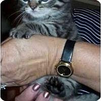 Adopt A Pet :: Melvin - Reston, VA