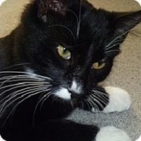 Adopt A Pet :: Onyx - Hamburg, NY
