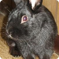 Adopt A Pet :: Adago-SPECIAL NEEDS - Warren, MI