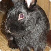 Lionhead Mix for adoption in Warren, Michigan - Adago-SPECIAL NEEDS