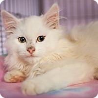 Adopt A Pet :: Raggedy Ann - Shelton, WA