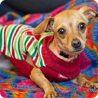Adopt A Pet :: Emma - Vacaville, CA