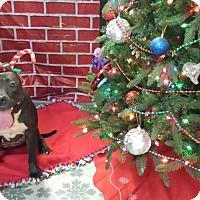 Adopt A Pet :: Raven - Houston, TX