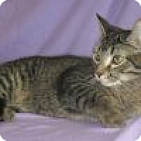 Adopt A Pet :: Lionel - Powell, OH